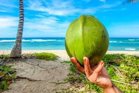 Coconut Water – Quick Healthy Hydration