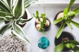House Plants Help your Health